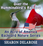 Over the Hummingbird's Rainbow