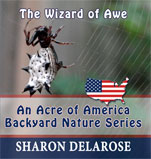 The Wizard of Awe